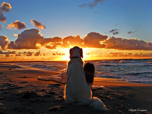 dog-and-Shauna-sunset-wallpaper