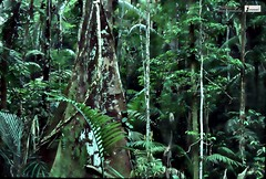 Rain forest picture (Infoway LLC - Website Development Company) Tags: wallpaper beautiful wonderful nice superb awesome images exotic hd illustrator incredible breathtaking classy bambooforest mindblowing dryforest amazonrainforest greenforest winterforest woodforest junglewallpaper sunsetwallpaper islandwallpaper summerforest responsivewebsitedesign rainforestpicture subtropicalforestwallpaper waterfallintropicalforest responsivewebdesigncompany mountainsnowforest yellowredautumnforest tropicaldesertisland tropicalforestwithriver