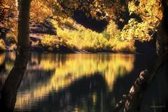 Legends of the Fall (Steve Corey) Tags: california trees fall fallcolors aspens sierranevada relfections lakewater easternsierra convictlake stevecorey ledgendsofthefall