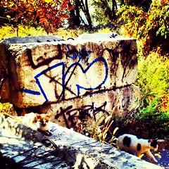 Disston denizens (Das_Zaku) Tags: city urban cats abandoned philadelphia animal graffiti cityscapes philly exploration northeast denizens strays northeastphilly tacony disston disstonexpedition