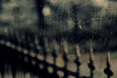 Halloween '13 Edition (lemonyellowsky) Tags: spider crossprocessed vampire zombie spiderweb textures mysterious ways mw hss hcs hff saturdaysunday artificiallyflavored 7daysofshooting rustedironfence picmonkey shadowyfriday week15rightupyourstreet vision:mountain=0503 localcidermill