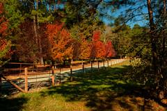 Fall Colors 2013 (2) (tommaync) Tags: autumn trees red orange green fall colors grass leaves fence nc nikon october northcarolina chathamcounty d40 digitalcameraclub 2013 gününeniyisithebestofday