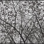 Autumn Abstract thumbnail