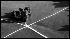 Grtnerhaus (Herminio.) Tags: road blackandwhite house salzburg blancoynegro garden austria casa sterreich highway camino carretera haus autobahn caminos roads cruces casas garten gardener crossings jardn blancinegre turnouts salzburgo jard camins hohensalzburg gardenerscottage jardinero creus cam grtner weichen strasen strase jardiner kreuzungen desvos grtnerhaus schwarzundweis ustria desviaments casadeljardiner casadeljardinero