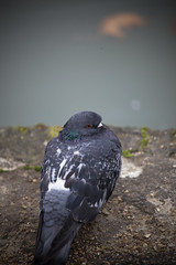 Sceaux Fall (Sophet) Tags: bird sceaux