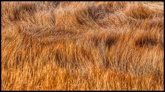 Marsh Grass Detail (imben2images) Tags: autumn interesting ct marsh guilford imben2
