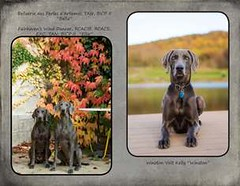 "FINAL Blue Weim 2014 calendar_Page_22 • <a style=""font-size:0.8em;"" href=""http://www.flickr.com/photos/109220014@N05/10955640655/"" target=""_blank"">View on Flickr</a>"