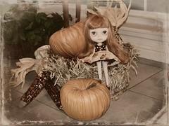 A Harvestful of Pumpkin Spice