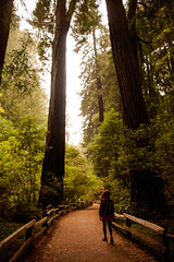Muir Woods (Lou Rouge) Tags: california trees woman usa naturaleza nature girl leaves forest giant walking hojas nationalpark rboles path muirwoods bosque redwood redwoods sequoia millvalley muirwoodsnationalmonument parquenatural coastredwood sequoiasempervirens secouyasgigantes