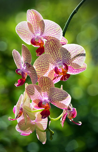 Orchids: Beauty in the Garden.