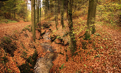 Autumn Forest (Habub3) Tags: wood travel autumn holiday fall forest canon river germany deutschland leaf reisen europa europe stitch urlaub herbst powershot bach fluss wald hdr vacanze weg g12 2013 habub3