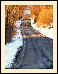 alchemy (Maewynia) Tags: trees light sun golden evening lane