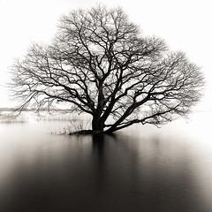 a Tree (HarQ Photography) Tags: lake tree japan fujifilm shiga biwa xe2 xf1855mm