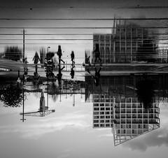 le de Nantes - Reflet (chat_44) Tags: famille architecture nikon streetphotography reflet miroir btiment nantes immeuble noirblanc effet paysdelaloire loireatlantique iledenantes d5100