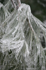 Iced Pine Needles (eyriel) Tags: winter storm cold macro ice nature pine frozen explore whitepine