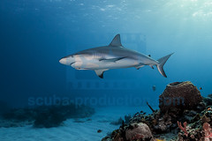 2014 03 TIGER BEACH-2364