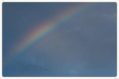 Rainbow (Zelda Wynn) Tags: bird nature rain weather clouds rainbow auckland optics troposphere newlynn zeldawynnphotography