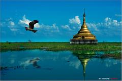 el vuelo del águila pescadora - the flight of the fish eagle (bit ramone) Tags: fish eagle burma myanmar bago águila pescadora birmania bitramone pentaxk5