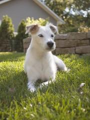 Sun and Shade (Van Allen Belt) Tags: olympus omsystem om zuiko 28mm f28 pen ep2 manualfocus dog jackrussellterrier
