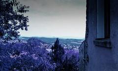 Forcalquier, lomography, 3 (Patrick.Raymond (3M views)) Tags: 04 provence forcalquier lomography argentique purple 100400 nikon expressyourself