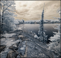 Granite shore of George Lake (syncros) Tags: infrared ir killarney provincialpark ontario canada landscape granite trees