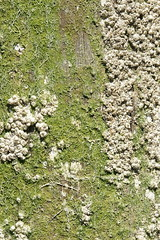 Barnacles, Horseshoe Bay (dylan583) Tags: sonydslra700 sonya700 sonyalpha sony sigmalens sigmadc281770hsmos 1770 sea seaside britishcolumbia canada barnacles
