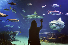 Young girl in glass tunnel in L'Oceanografic aquarium  with fish  ,Valencia, Spain (marozn) Tags: aquarium valencia spain water tunnel glass life underwater center science pool transparent marine extraordinary tourism tourist fish exotic interior animal big blue dive dream dubai light modern ocean oceanarium park people tropical oceanografic barcelona travel area architecture european europe mall landmark art shark young girl woman one silhouette reflection swim