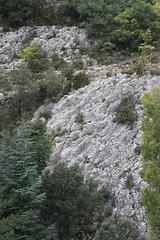 Sommet de la Plate-Pic du Comte_132 (randoguy26) Tags: beaumont ventoux mont plate comte vaucluse sommet pic