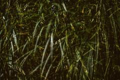 Multiple Nature 346 (pni) Tags: leaf multiexposure dark multipleexposure tripleexposure munkkiniemi munksns helsinki helsingfors finland suomi pekkanikrus skrubu pni