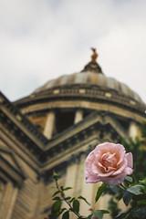London St Pauls (chabish123) Tags: london st pauls flower fuji xpro2 lightroom colorefexpro