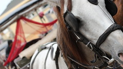 (yalginkayhan) Tags: istanbul horses smart faithful friendly bykada sharp waiting slands prince