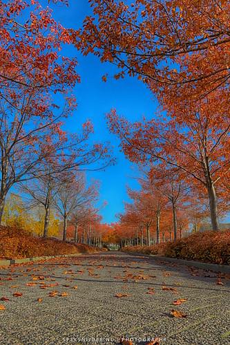 Herfst in Zielhorst