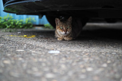 Where's the cats?Olympus 25mm f1.2 PRO () Tags: olympus penf cat cats  25mm f12 pro 2512pro street