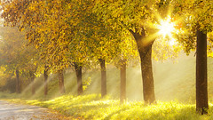 Magic after the rain (Bernhard Sitzwohl) Tags: lightrays trees autumntrees colour colourful sunburst fog nature outdoor gras raysoflight sun glow glowingcolours morning dawn morgennebel sonnenaufgang sonnenstrahlen herbst farbe grn wiese sonnenlicht foliage bltter