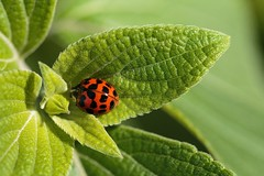 Spotted (daubiwan) Tags: ifttt 500px macro photo nature green verte plante plant grass herbe 100mm canon 70d