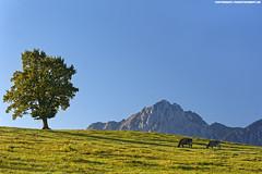 OSTALLGUER BERGLANDSCHAFT #1 (PADDYSCHMITT.DE) Tags: kheimallgu berge ostallgu herbstimostallgu baumimgu gipfel
