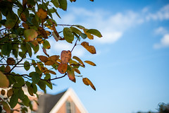 269:365 - 10/11/2016 - Fall leaf (Shardayyy) Tags: 365 365project project365 nikon d800 potd photoaday 35mm shardayyyphotography shardayyyyphotographycom