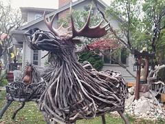 Moose of a different kind (canadianlookin) Tags: winnipeg moose driftwood antlers grosvenor sculpture art october 2016 folkart