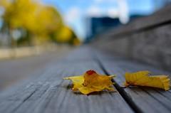 FLOU (hguillet03) Tags: automne feuille jaune couleurs paris