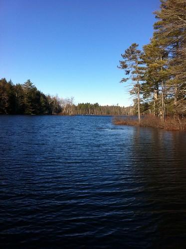 Cold Rain Pond - www.amazingfishametric.com