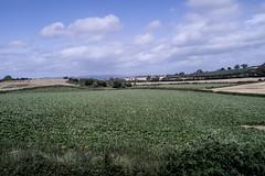 green fields (glasnevinz) Tags: ireland limerick mallow field pasture