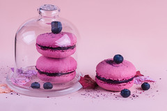 Blueberry macaroon on a pink background (mouse_adikatz) Tags: macaroons macaroon pink background top view food pastel sweet french colorful macaron cake color bakery tasty dessert pastry traditional snack gourmet cookie delicious biscuit flat bake france flavor confection assortmenteating cream sugar candy object