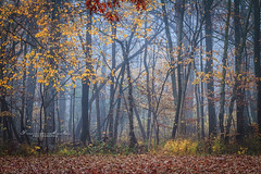 Early Morning (Francisco Montes Jr.) Tags: 2016 7d bussewoods canon canon7d francisco franciscomontes franciscomontesphotography il illinois montes outdoor autumn color colores fall fog forest foresta green lago lake naturaleza nature neblina orange otoo park parque parqueforestal photography schaumburg verde