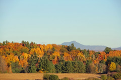 Autumn View of Camels Hump (Elise Creations & Passions) Tags: autumnviewofcamelshumpwithearthtones fallchrlt9img1759ibm fall elisemarksfallfoliagephotography vermontfallfoliage autumn autumncolors fallfoliage fallcolors fall2016 fallleaves colorfultrees colorfulfoliage colorfulleaves redleaves redfoliage orangeleaves orangefoliage yellowleaves yellowfoliage brownleaves brownfoliage falllight fallshadows groundcoveredinleaves tree trees woods forest pinebranches pinetrees mapletrees birchtrees oaktrees poplartrees photobyelisemarks elisecreationspassionsphotography elisemarksphotography vermontnaturephotography flora canon outdoors landscape branches treetrunks mountain mountains mountainpeak mountainrange mountainridge foothills hill thegreenmountains charlottevermont