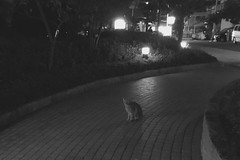 Today's Cat@2016-11-07 (masatsu) Tags: cat thebiggestgroupwithonlycats catspotting cameraphone apple softbank iphone bw