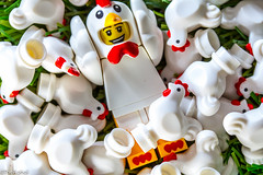 Happiness is... (The Aphol) Tags: lego legography minifigures toy chicken legophotography toyphotography happiness happy friendship