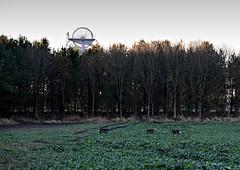 Roe-or-Rein-Deer-in-field-next-Woodhorn-Colliery-? (321dustymix) Tags: wildlife woodhorncolliery heapstead field roedeer deer animal autumn woodhorncollierymuseum woodhornmuseumqeparkautumn pithead