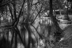 Nature in B&W (Vctor M. G.) Tags: nature blackandwhite bn bw water trees shadows