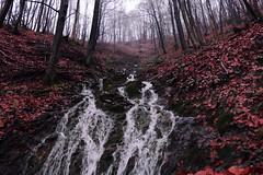 rosso (lauretta michelutti) Tags: albero