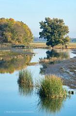 Wetlands (Marc Haegeman Photography) Tags: wetlands biesboschnationaalpark nederland netherlands holland marchaegemanphotography nikon landschap landscape nature water sky tree reflections biesbosch dordrecht outdoor